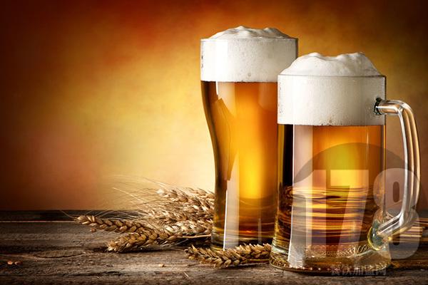 麦8度精酿啤酒怎么样?来看看关于它的详细介绍吧